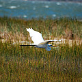 Flight Of The Egret by Lori Tambakis