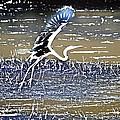 Flight Of The Egret V5 by Douglas Barnard
