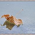 Floating Down Lifes Path by Deborah Benoit