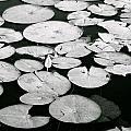Floating by Kelsey Reeann Rocco
