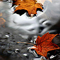 Floating Maple Leaves by LeeAnn McLaneGoetz McLaneGoetzStudioLLCcom