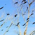 Flocking Crows by Viktor Savchenko