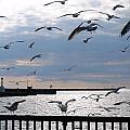 Flocking Gulls by Michael Frank Jr