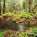Flood In The Forest by Adam Jewell