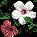 Floral by Athala Carole Bruckner