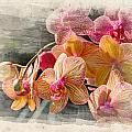Floral Beauty by Ricky Barnard