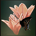 Floral Butterfly Dance by Debra     Vatalaro