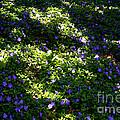 Floral Carpet by Susan Herber