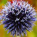 Floral Colors by Matt Dobson