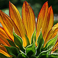 Floral Flaming Fingers by Susan Herber