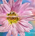 Floral 'n' Water Art 5 by Kaye Menner