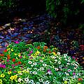 Floral Path by Jan Davis