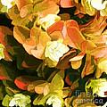 Floral Print by David Klaboe