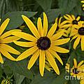 Floral Sunshine by Arlene Carmel