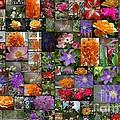Florals by Donna Bentley