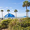 Florida  by Betsy Knapp