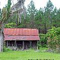 Florida Bunk House by Larry Van Valkenburgh