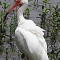 Florida Crane by Kim Galluzzo Wozniak