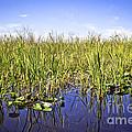 Florida Everglades 5 by Madeline Ellis