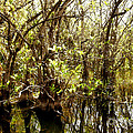 Florida Everglades 9 by Madeline Ellis