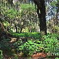 Florida Forest by Carol  Bradley
