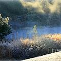 Florida Frosty Morning by Carol Groenen
