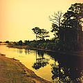 Florida Landscape II by Susanne Van Hulst