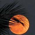 Florida Moonrise by Peg Urban