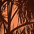 Florida Palm Shadow by Carolyn Marshall