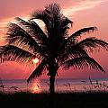 Palm  by Paul Fell