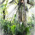 Florida Palms by Carolyn Marshall