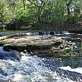 Florida Rapids by Susan Wyman
