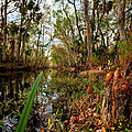 Florida Stream by Christopher Holmes