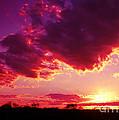 Florida Sunset by Judi Bagwell