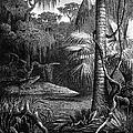 Florida: Swamp by Granger