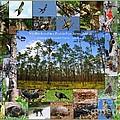 Florida Wildlife Photo Collage by Barbara Bowen