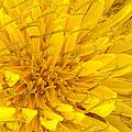 Flower - Dandelion by Mike Savad