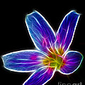 Flower - Electric Blue - Abstract by Paul Ward