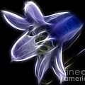 Flower - Ghostly Blue - Abstract by Paul Ward