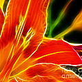 Flower - Lily 1 - Abstract by Paul Ward