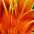 Flower - Orange - Abstract by Paul Ward
