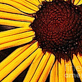 Flower - Yellow And Brown - Abstract by Paul Ward