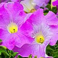 Flower 18 by Burney Lieberman