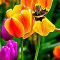 Flower 19 by Burney Lieberman