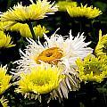 Flower 21 by Burney Lieberman