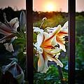 Flower 5 by Bener Kavukcuoglu