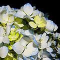 Flower 75 by Terri Winkler