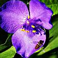 Flower And Bee by Joe Faherty