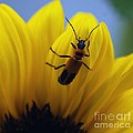 Flower And Bug by Ronald Grogan