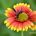 Flower And Insect  by Kathy Gibbons